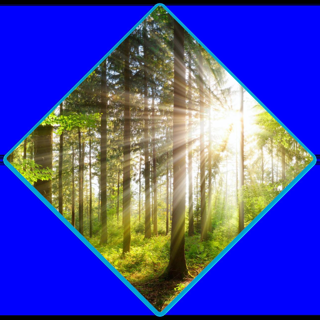 Losange forêt